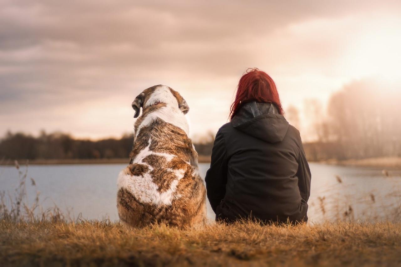 «Лапа дружбы»: Открытые НКО объявляют конкурс лучших проектов по спасению животных